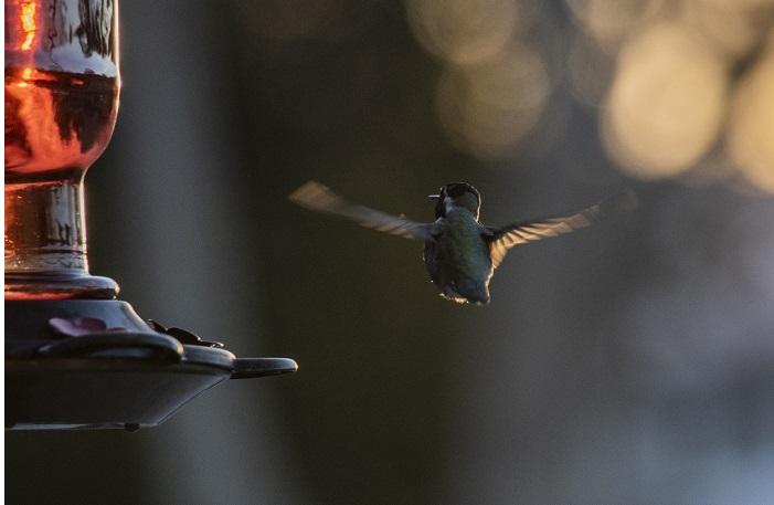 flying.bird.jpg